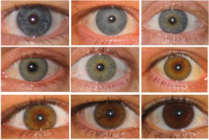 Often Confused With Hazel Eyes Amber Tend To Be A Solid Golden Or Copper Color Without Flecks Of Blue Green Typical