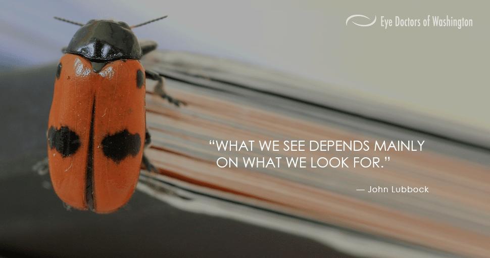 EDOW_Look_Closely_Ladybug